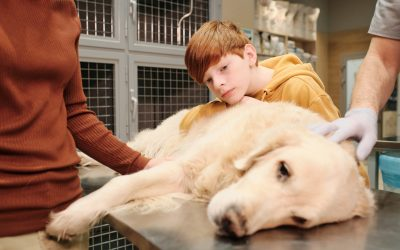 ¿Qué es la leishmaniosis canina? Síntomas y tratamientos
